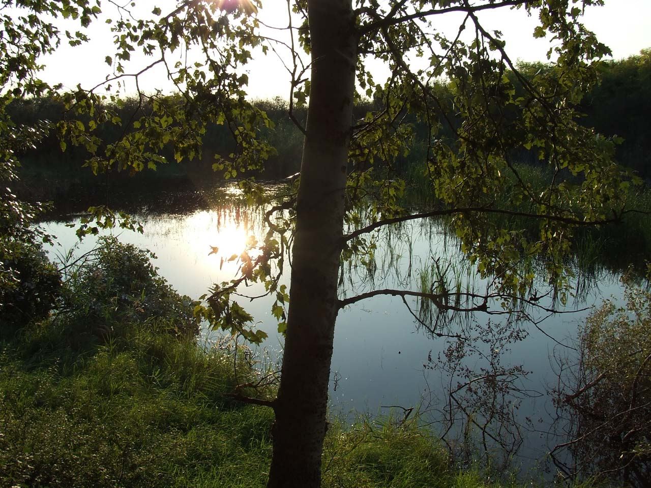 Another view of the peaceful Pond<br>Click to enlarge